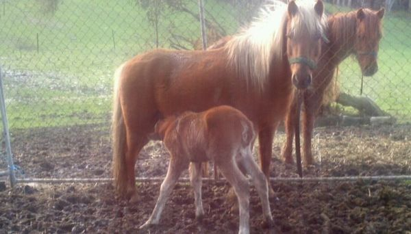 Peaches and foal, born into care