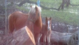 Peaches and Bub 2 days old