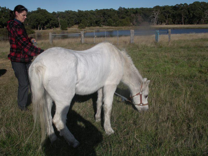 GEorges horses 017