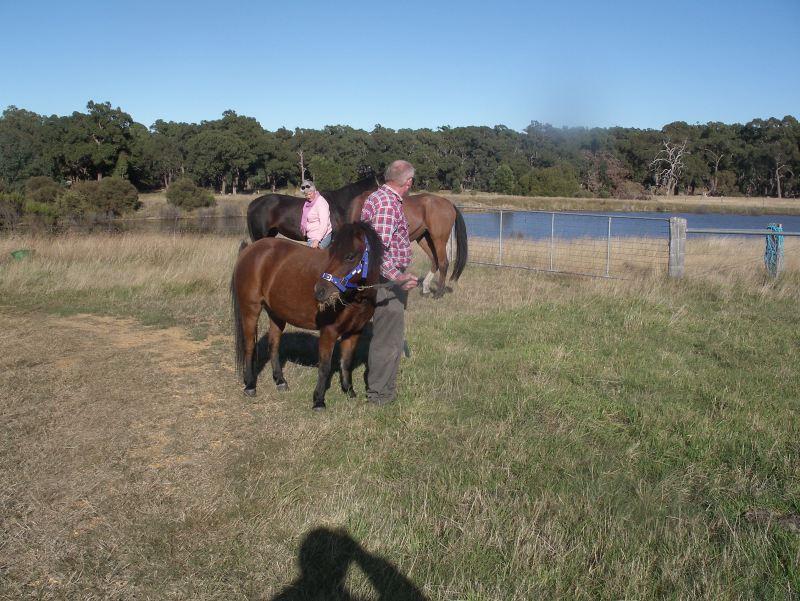 GEorges horses 021