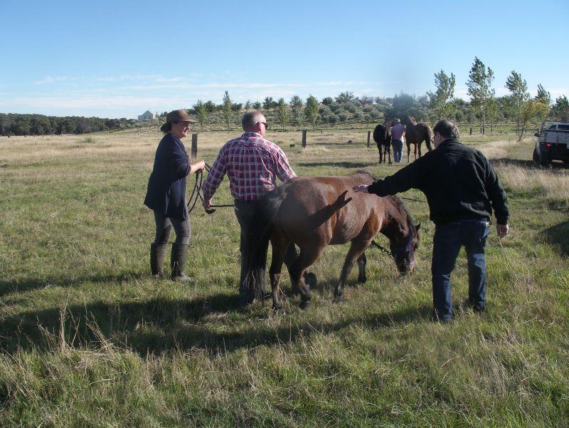 GEorges horses 024