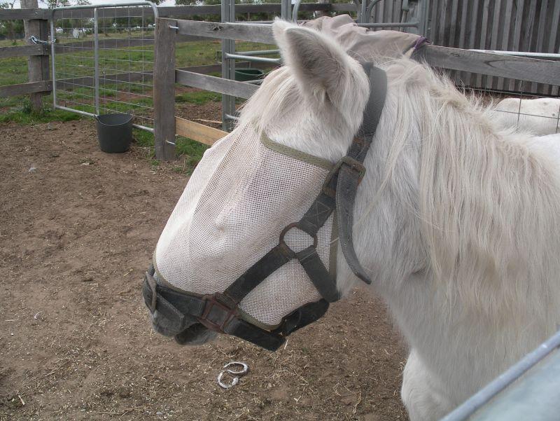 GEorges horses 033